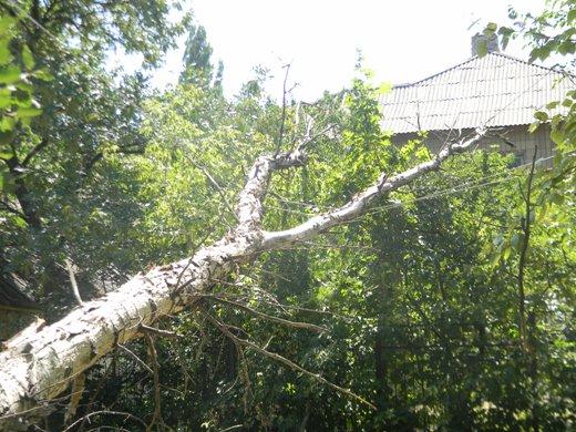 образец письма от жильцов спилить деревья
