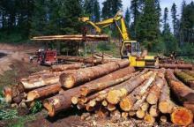 """Складаємо звітність по """"лісу"""" за новою формою"""